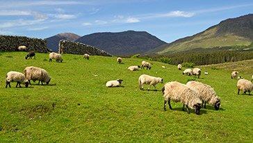 rancharbeit irland