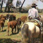Programm: Ranchstay in Argentinien