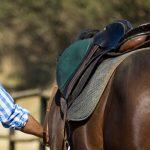 Programm: Ranch & Travel in Australien