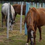 Programm: Farm & Ranchstay Neuseeland